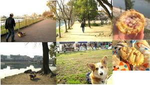 4月春の京橋朝市なの!