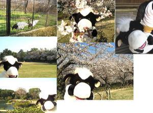 春の後楽園行けたうち!