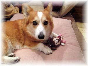 岡山犬さんファミリーから頂いたプレゼントのミニーちゃん、ロックオン!