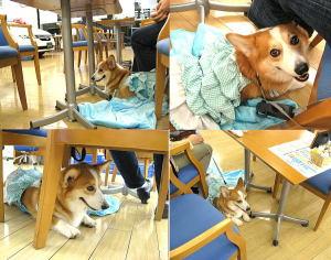 HONDA 東京中央 多摩店さんへは愛犬と一緒にでもOK