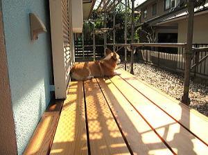 夏暑し~ それでも日向~ぼっこ中