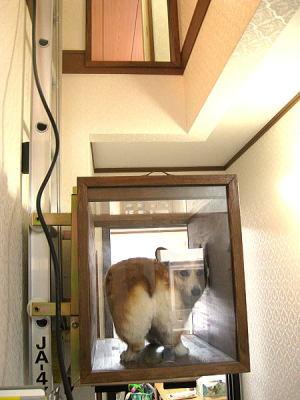 エレベーターガールの見返り美人さん?なの?