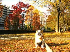 もう公園には葉っぱがなくなっているよ。