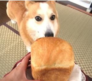 コギ友ミルクちゃんのママさんから頂いた手作りパン