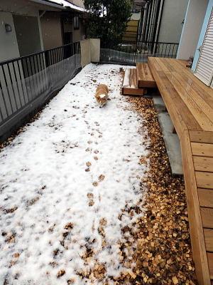 私の足跡だけ~雪少ししかないな~♪