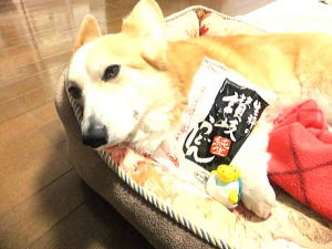 岡山犬さんから届いた讃岐うどん