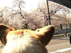 町田市にある菅原神社前をドライブで通った時にパチリ