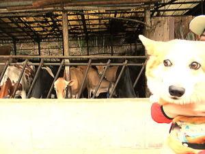 なんかさっきと違う牛さん達で猛烈に食べてます・・・怖いっ