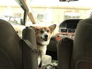 車で迎えに来て下さいました~。