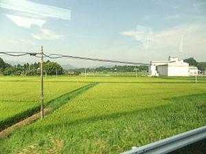 新地町まで行く途中の景色。まだ黄金色には稲が実ってない時期です