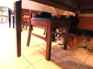 私もテーブル下で待機中