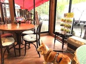 『コクーンティーガーデン』で朝食を店内でワンちゃんもOK