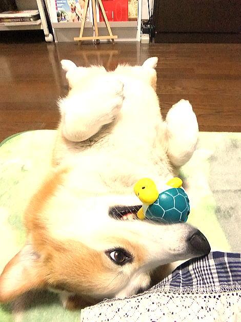 軽井沢大好きだけど、ワンちゃんOKの公園多いと良いな~