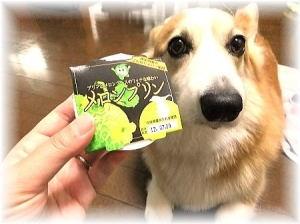 岡山犬さんからプレゼントが届きました♪