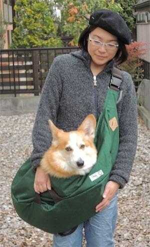 中型犬コーギーのトリさんの体重は12キロ台です
