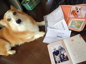 防災震災用に準備している愛犬手帳?や病気の履歴など記載