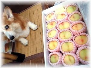 岡山犬さんから届いた品♪清水白桃様でらっしゃいます。
