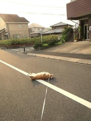 道路のど真ん中でゴロゴロするでなっしー!