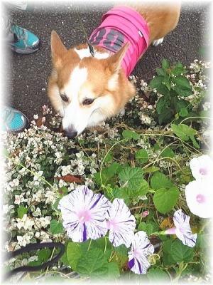 キレイなお花だね~