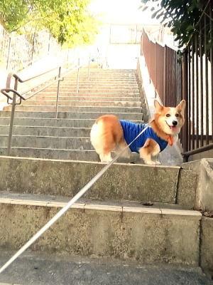 この階段長~いの♪