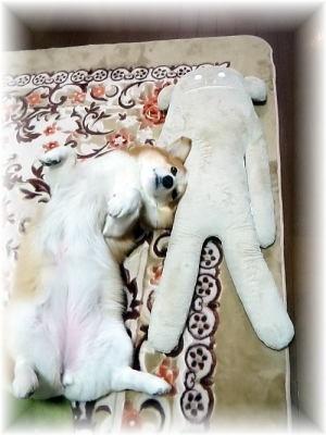 ママ殿のお昼寝枕は・・・