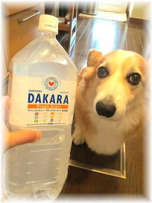 岡山犬さんありがとう!ゴクゴク、ママ殿飲んでるよ