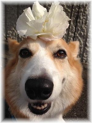 ご近所さんのお花の髪飾り?でパチリ