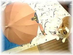 雨の日はルンルンお気に入りの傘で