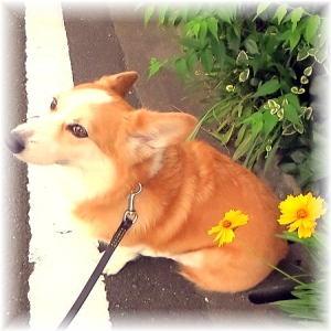 ご近所さんのお家のお花でパチリ