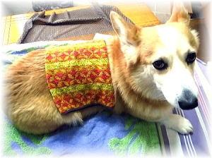 一日2回の散歩後、最初に温かいタオルで温湿布