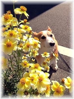 2014年10月29日 ご近所の奥さんのお花でパチリ