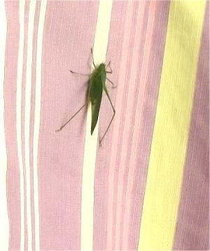 これ何?蟲?大きいね~