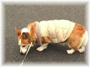 散歩中、暑くなってきたらダウン脱ぐ時も