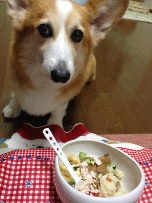 ご飯元気に食べてますなの!