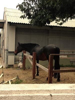 新しい道を散歩したらお馬さん発見
