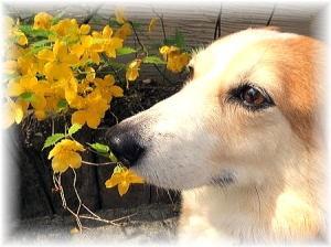 キレイな花々が桜が終わっても咲いているな~
