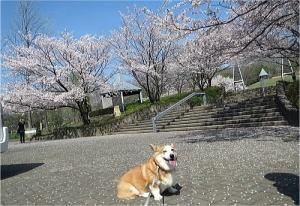 今年の春はなかなか天気が良い日が少なかった~