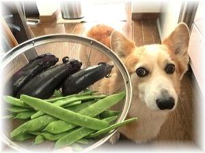 美味しいお野菜頂ける季節になりました