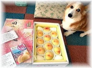 岡山犬さんから岡山の白桃が届きましたなの