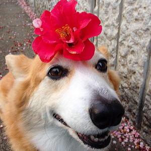 こちらもキレイに咲きました