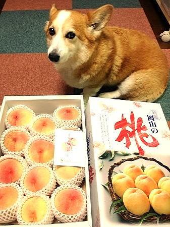 岡山犬さんありがとう!