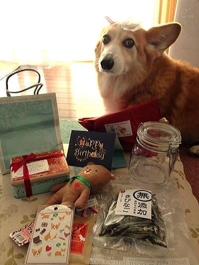同胎犬アンナちゃんのママさんからのプレゼント
